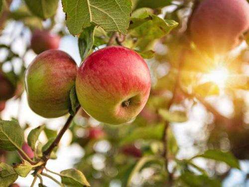 加码评级!摩根士丹利:苹果财报将优于华尔街预期